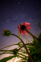 Stars and Flowers P1